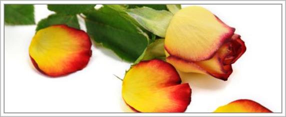frittelle-di-rose