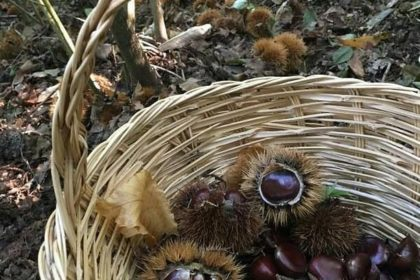 Castagne: scopriamo le proprietà di questo antico frutto!