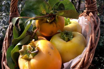 La frutta di stagione: le proprietà dei CACHI